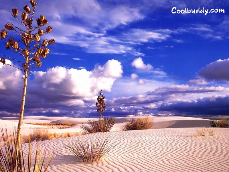http://coolbuddy.com/wallpapers/landscapes/imgs/desert007.jpg